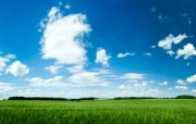 新西兰郊外风景壁纸 新西兰郊外风景 蓝天白云麦田图片壁纸 新西兰郊外风景壁纸 风景壁纸