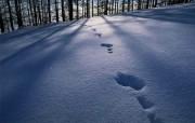 雪景 精品欣赏壁纸 风景壁纸
