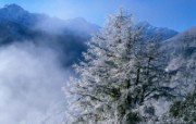 雪景图片 美丽冬天雪景壁纸 雪景图片 美丽冬天雪景壁纸 风景壁纸