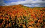 上帝之眼 Yann Arthus Bertrand 扬恩 亚瑟空中摄影奇景壁纸北美篇 鸟瞰加拿大 魁北克秋天的森林图片壁纸 扬恩・亚瑟空中摄影奇景 北美篇 风景壁纸