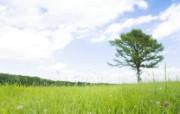 阳光草原风景壁纸 风景壁纸