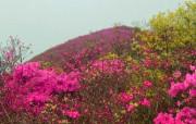 阳明山国家公园壁纸 阳明山国家公园壁纸 风景壁纸
