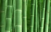竹林深处青葱世界 风景壁纸