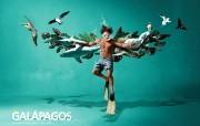 创意无限 Fly Galapagos Tame Ecuador航空公司创意广告 创意广告设计壁纸第四辑 广告壁纸
