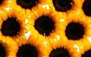 1440花朵背景 2 15 1440花朵背景 花卉壁纸