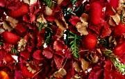 1440花朵背景 2 5 1440花朵背景 花卉壁纸