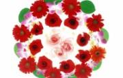 1600花朵背景 2 19 1600花朵背景 花卉壁纸