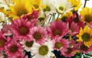 1600花朵背景 2 15 1600花朵背景 花卉壁纸
