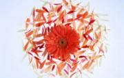 1600花朵背景 2 13 1600花朵背景 花卉壁纸