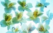 1600花朵背景 2 12 1600花朵背景 花卉壁纸