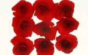 1600花朵背景 2 9 1600花朵背景 花卉壁纸