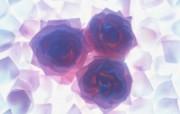 1600花朵背景 2 6 1600花朵背景 花卉壁纸