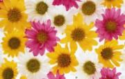 1600花朵背景 2 2 1600花朵背景 花卉壁纸
