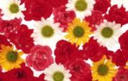 1600花朵背景 2 1 1600花朵背景 花卉壁纸