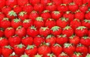 1600水果 7 16 1600水果 花卉壁纸