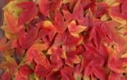 1680花朵背景 3 13 1680花朵背景 花卉壁纸