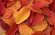 1680花朵背景 3 6 1680花朵背景 花卉壁纸