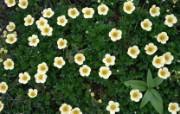 1680花朵背景 6 20 1680花朵背景 花卉壁纸