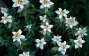 1680花朵背景 6 19 1680花朵背景 花卉壁纸