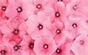 1920花朵背景 2 15 1920花朵背景 花卉壁纸