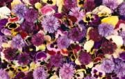 1920花朵背景 2 14 1920花朵背景 花卉壁纸