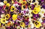 1920花朵背景 2 13 1920花朵背景 花卉壁纸