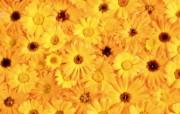 1920花朵背景 3 18 1920花朵背景 花卉壁纸
