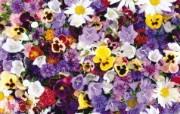 1920花朵背景 3 16 1920花朵背景 花卉壁纸
