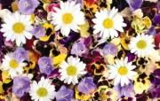 1920花朵背景 3 15 1920花朵背景 花卉壁纸
