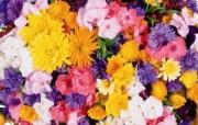 1920花朵背景 3 10 1920花朵背景 花卉壁纸