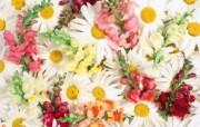 1920花朵背景 3 9 1920花朵背景 花卉壁纸