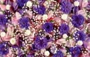 1920花朵背景 3 3 1920花朵背景 花卉壁纸