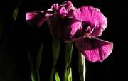 兰花写真 1 34 兰花写真 花卉壁纸