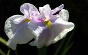 兰花写真 1 26 兰花写真 花卉壁纸