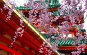 樱花时节 1 69 樱花时节 花卉壁纸