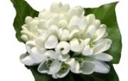 白色花朵 2 16 白色花朵 花卉壁纸