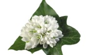 白色花朵 2 15 白色花朵 花卉壁纸
