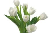 白色花朵 2 11 白色花朵 花卉壁纸