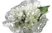 白色花朵 2 8 白色花朵 花卉壁纸