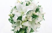 白色花朵 2 5 白色花朵 花卉壁纸