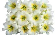 白色花朵 2 3 白色花朵 花卉壁纸