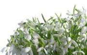 白色花朵 3 18 白色花朵 花卉壁纸