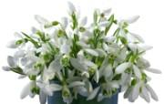 白色花朵 3 17 白色花朵 花卉壁纸
