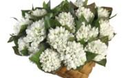 白色花朵 4 18 白色花朵 花卉壁纸