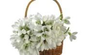 白色花朵 4 17 白色花朵 花卉壁纸
