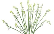 白色花朵 4 14 白色花朵 花卉壁纸