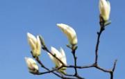 白色花朵 4 12 白色花朵 花卉壁纸