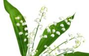 白色花朵 4 7 白色花朵 花卉壁纸