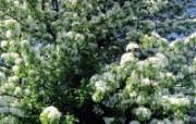 白色花朵 4 5 白色花朵 花卉壁纸