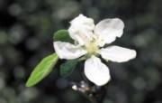 白色花朵 4 4 白色花朵 花卉壁纸